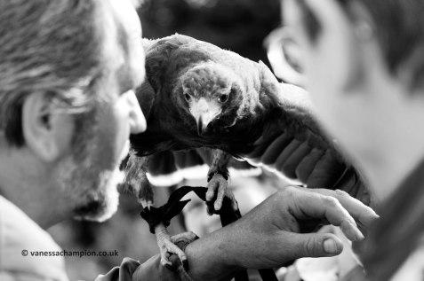 Irish Raptor Research Centre. All images copyright Vanessa Champion