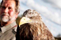 Irish Raptor Research Centre copyright Vanessa Champion (16)