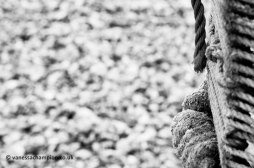Selsey Beach Copyright Vanessa Champion 07747 025 361 LOW RES (5)