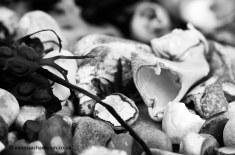 Selsey Beach copyright Vanessa Champion 07747 025361 LOW RESL (1)
